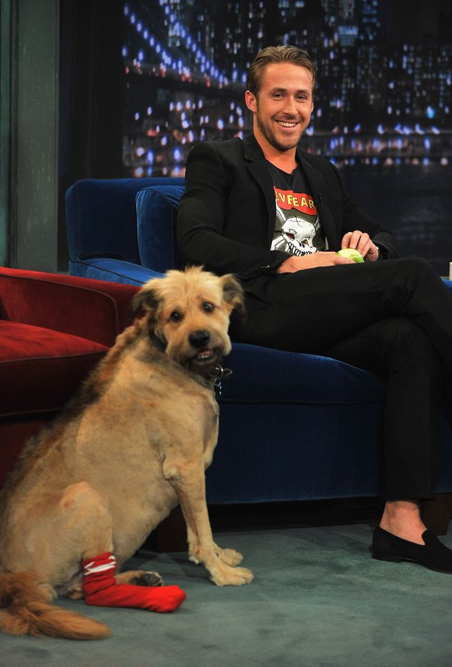 Ryan Gosling mit Hund George