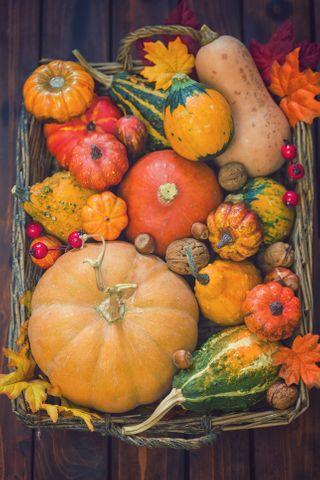 Quels sont les légumes de saison en novembre ?