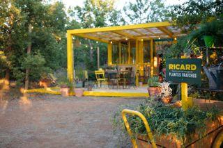 Fabrication du Ricard : du champs au verre