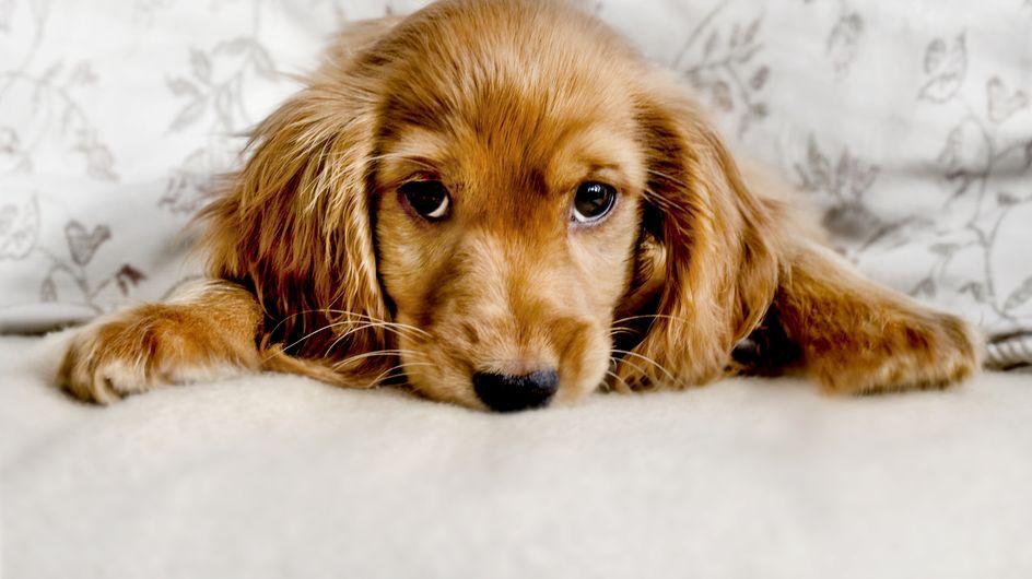 Schon gewusst? Diese 10 Dinge mag dein Hund nicht