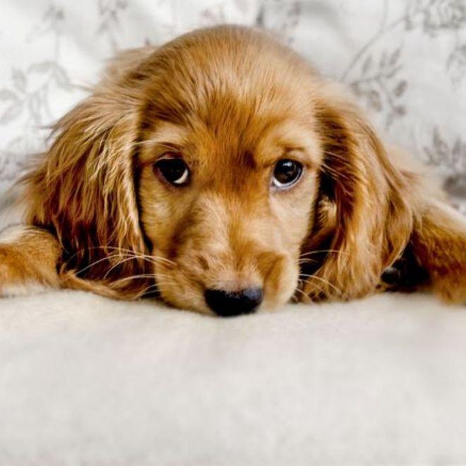 Le 10 cose che non piacciono al tuo cane