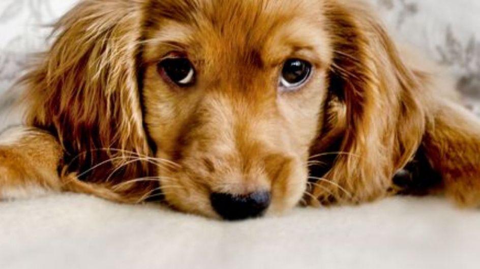Lo sapevi? Al tuo cane non piacciono queste 10 cose!