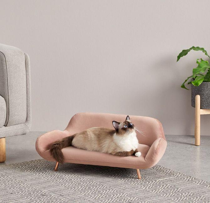 Un canapé pour chat