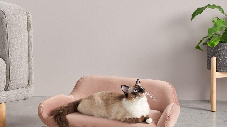 30 meubles et accessoires design pour nos animaux de compagnie