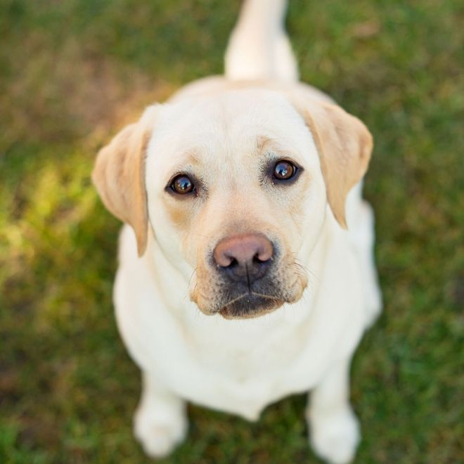 Gli alimenti pericolosi per il tuo cane
