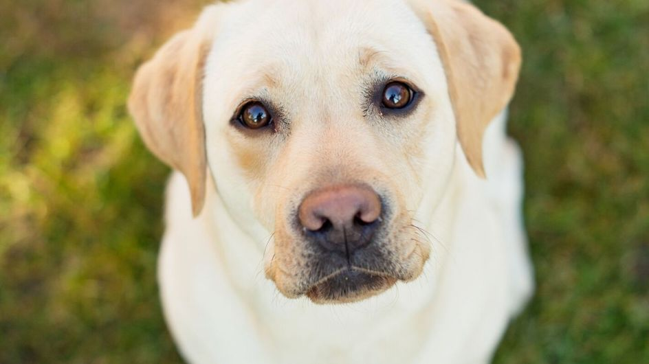 I cibi che fanno male al tuo cane