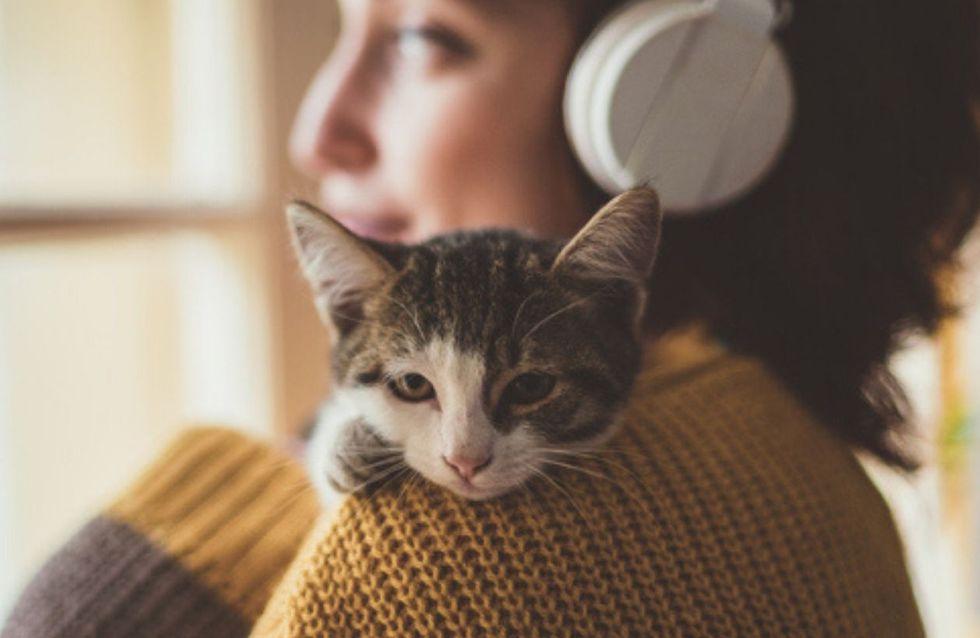 Das ist die perfekte Katze für dein Sternzeichen