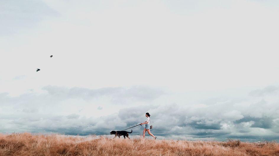 Treue Begleiter: Darum tun uns Hunde und Katzen so gut