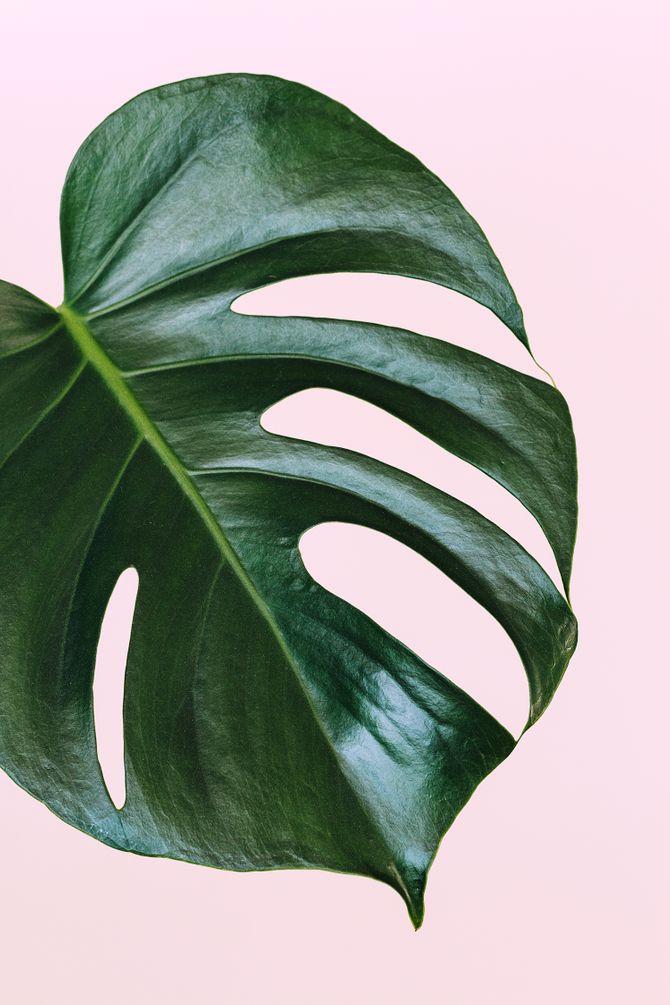 Les plantes dépolluantes à avoir chez soi