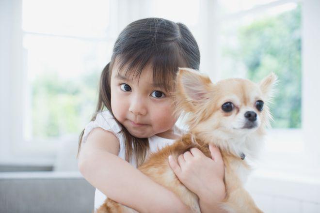 Diese Hunderassen sind die perfekten Begleiter für Familien
