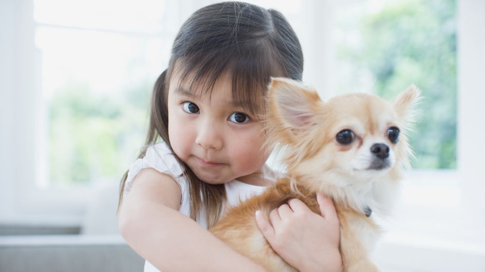 Beste Familienhunde: Diese Hunderassen sind besonders geeignet