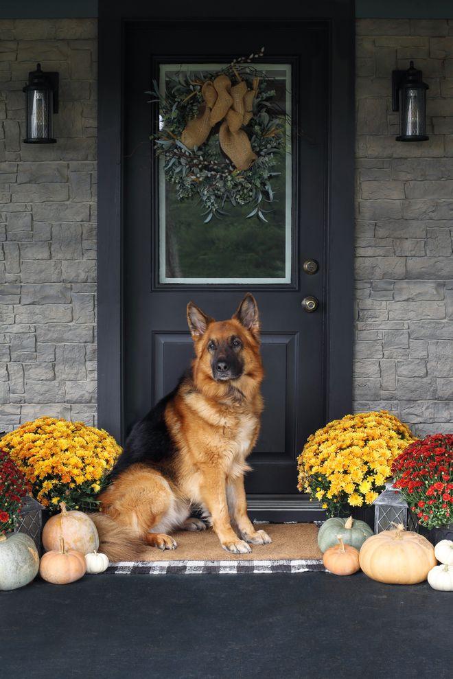 Diese Hunderassen bewachen Familien am besten