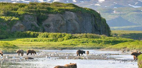 ¡Un oso salvaje se relaja al lado de un hombre!