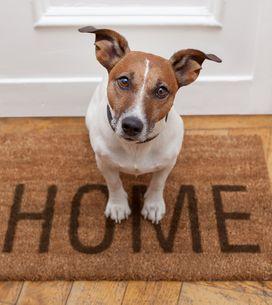 Você sempre quis saber o que seu cachorro faz quando fica sozinho?