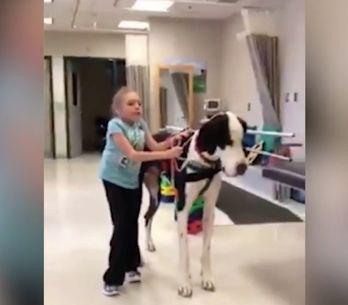 ¡Esta niña aprende a caminar con la ayuda de su perro!