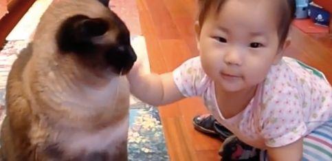 ¡Esta pequeñaja parece hablar el lenguaje de los gatos!