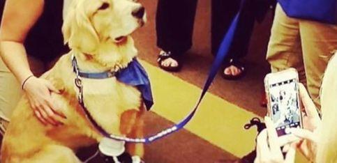 ¡Este perro es un gran ejemplo de superación!