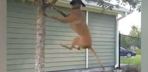 ¿Perro o mono? Tú decides...