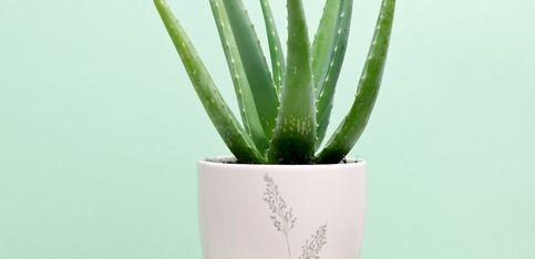 Diese 7 Pflanzen sind bestens fürs Bad geeignet
