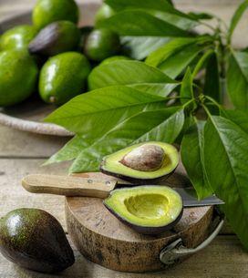 Ricette con l'avocado: ecco 3 idee per gustarlo!