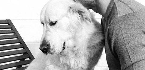 Petfluencers: estas mascotas tienen más followers que tú