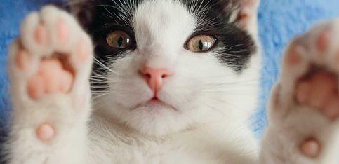 Gatti, come capire il loro linguaggio.