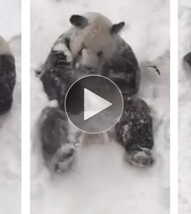 ¡Este achuchable panda te va a sacar una sonrisa!