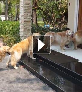 On vous présente les chiens les plus sages du monde