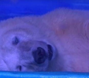 De lo más cruel: un zoo en mitad de un centro comercial