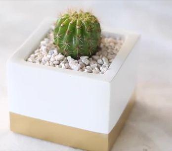¡Decora tu casa con plantas ornamentales esta primavera!