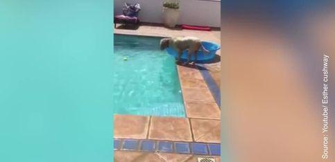 Ce chien est un génie! A voir absolument!
