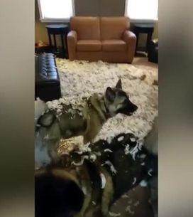 Questi cani l'hanno combinata davvero grossa