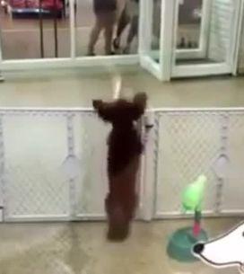 Questo cane è felicissimo di vedere il suo padrone!