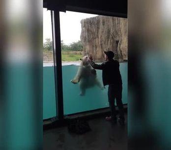 ¡Este oso polar imita lo que hace este chico!