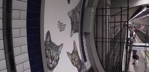 ¡Los gatos invaden el metro de Londres!