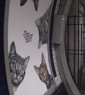 Des photos de chats décorent le métro londonien...