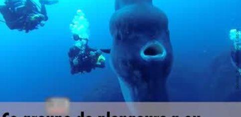 Ces plongeurs font une découverte incroyable!