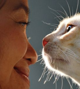 Les chats préfèrent en fait les humains à la nourriture