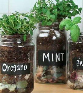 DIY de horta no pote: veja como é fácil e divertido de fazer