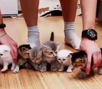 Inúmeras tentativas de alinhar 10 gatinhos para uma foto