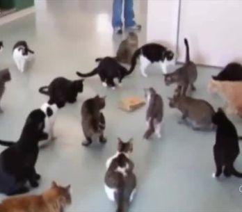 Si vous cherchez une blague à faire à votre chat, voici les meilleurs idées