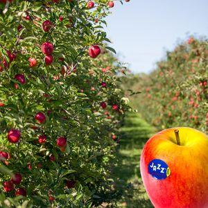 THE JAZZ SENSATION JAZZ™ Apfel
