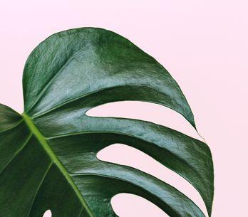 14 plantes dépolluantes à avoir chez soi