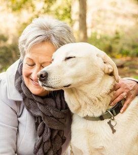 30 razas de perros tranquilos ideales para personas mayores