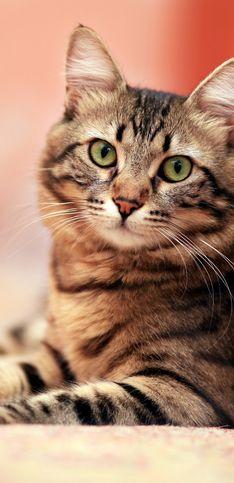 30 curiosidades sobre los gatos que te van a sorprender