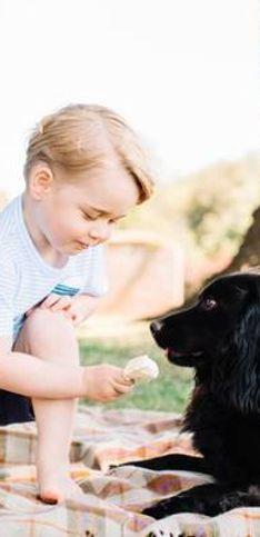 50 famosos que están locamente enamorados de sus perros