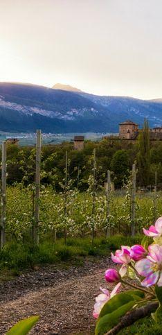 Vacanze in montagna: le attività e i luoghi da scoprire in Trentino