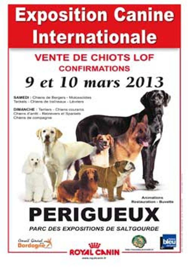88ème exposition Canine Internationale à Périgueux les 9 et 10 mars 2013