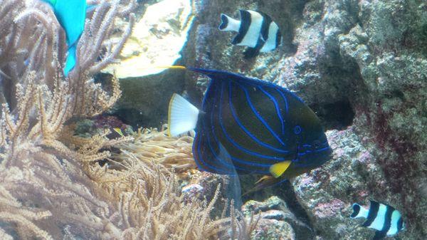 l'Aquaciné, L'aquarium de Paris  un lieu de découverte féerique