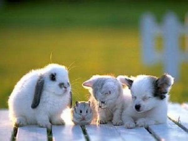 3 idées géniales pour toutes celles qui rêvent d'avoir un animal de compagnie mais qui ne peuvent pas !